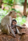 Breastfeeding Baby Monkey
