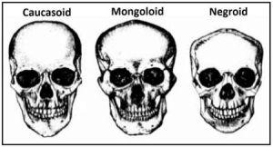 94575d9973a96888fa7702f4e7e9684e--head-anatomy-skulls